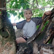 Százéves eperfa a kétsopronyi Kemencés Tanyán