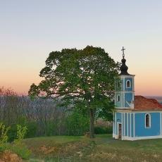 Mausz-fa, a  hárs a dombtetőn - a Szekszárdi dombság és a Sárköz peremén